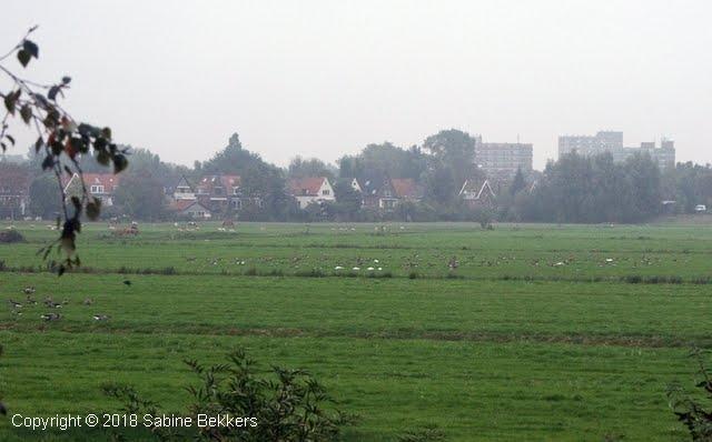 2007 10 3-10 Ganzen (1)