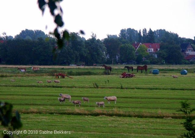 2008 7 8-7 Wilmkebreek (1)