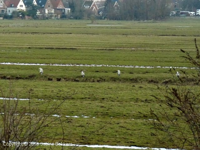 2010 2 16-2 Reigers