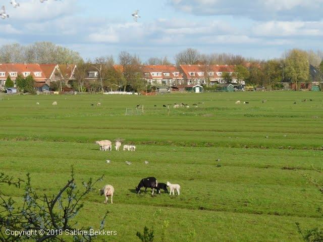 2010 4 21-4 Wilmkebreek