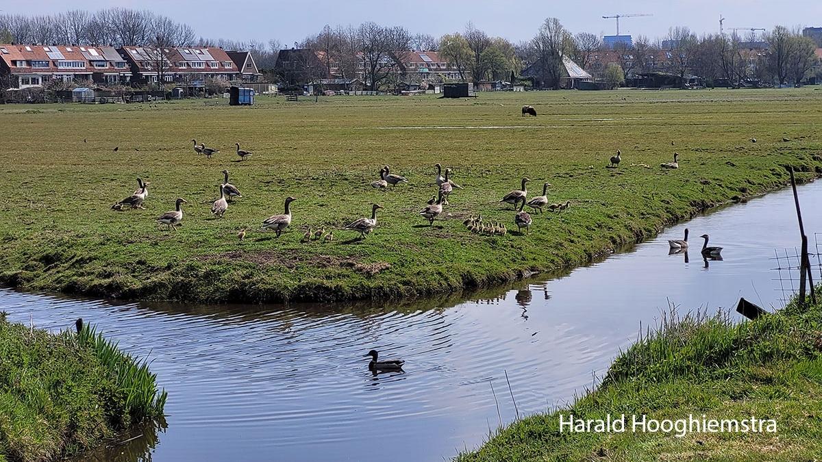 Harald-Hoofhiemstra-20210402_112243-LR10