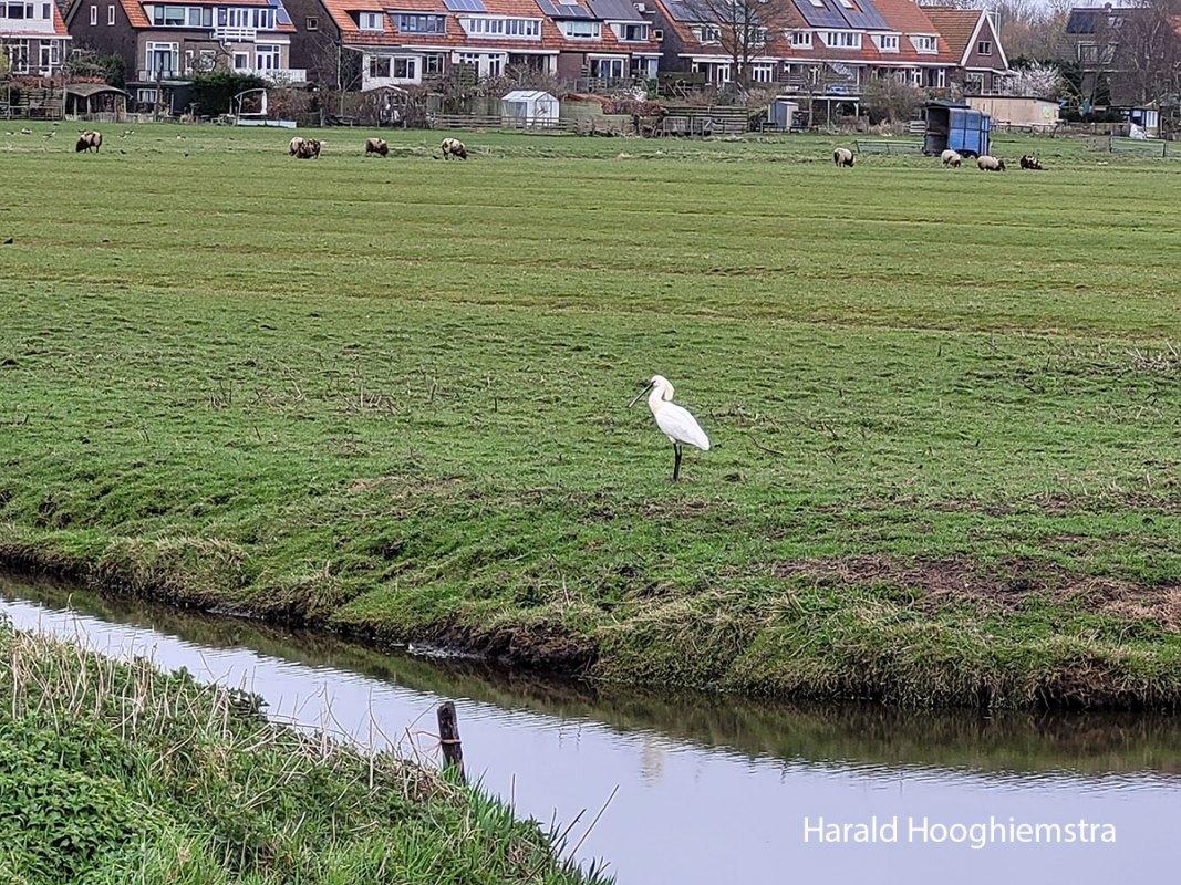 Harald-Hooghiemstra-20210402_LR4
