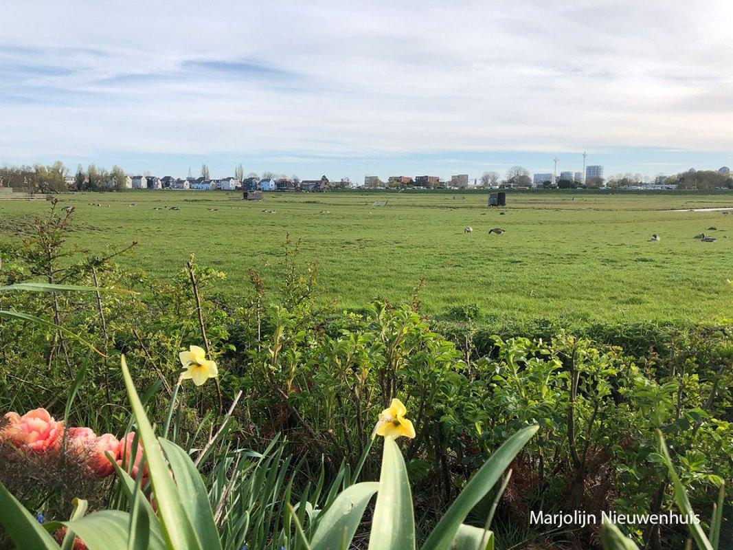 Marjolijn-Nieuwenhuis-polder-met-narcis-LR