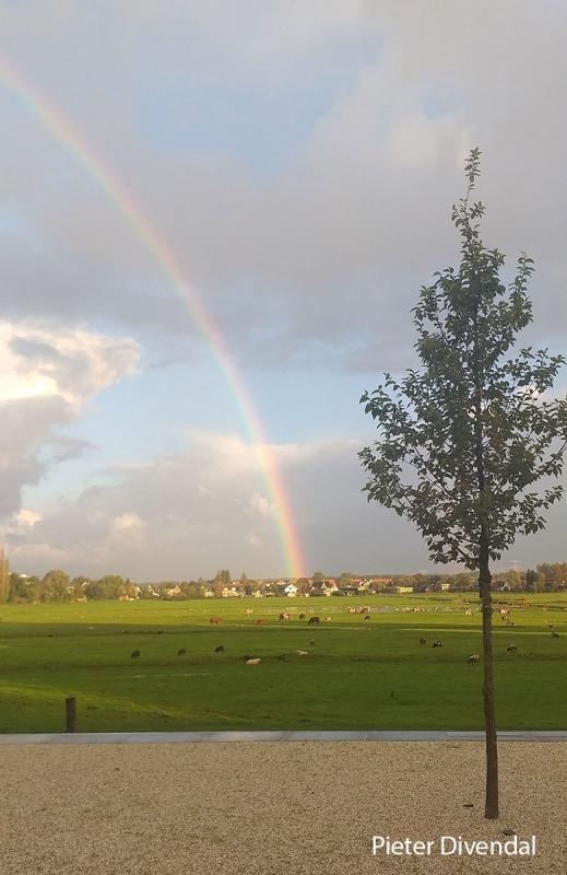 Pieter-Divendal-20210207-regenboog