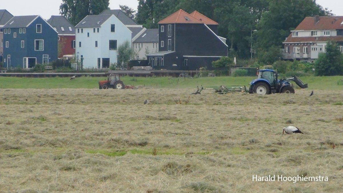 Harald-maaien-05-LR