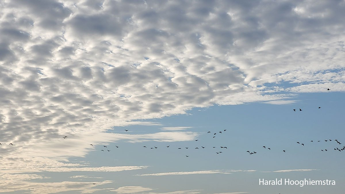 Harald-ochtendgloren-03-LR