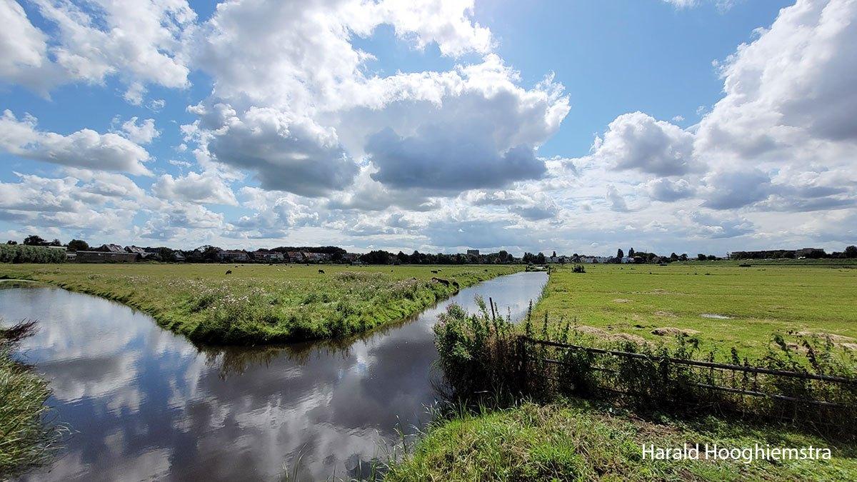 Harald-zomer21-polder-2-LR