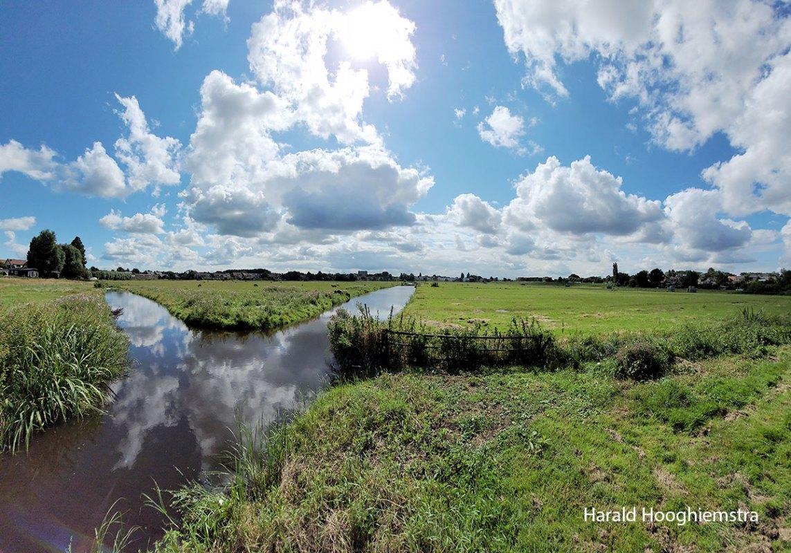 Harald-zomer21-polder-3-LR