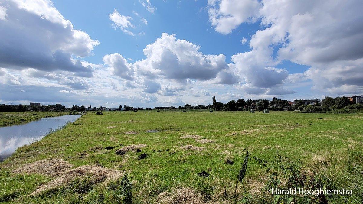 Harald-zomer21-polder-LR