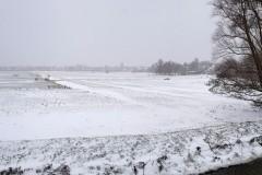 Wilmkebreekpolder-sneeuwpolder-met-bomen