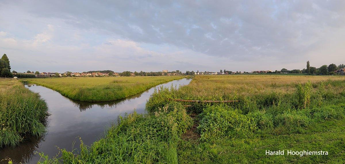 Harald-polder-eind-juni-LR