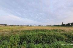Harald-polder-eind-juni-2-LR