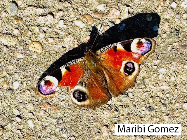 Maribi-Gomez-Dagpauwoog-LR