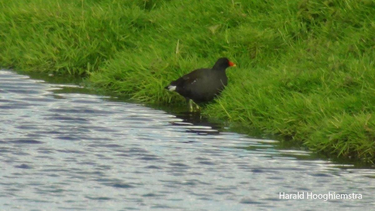 Harald-waterhoen2