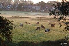 Thijs-Knol-polder-herfst