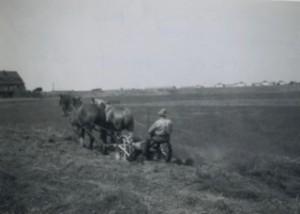 oude weilandfotos